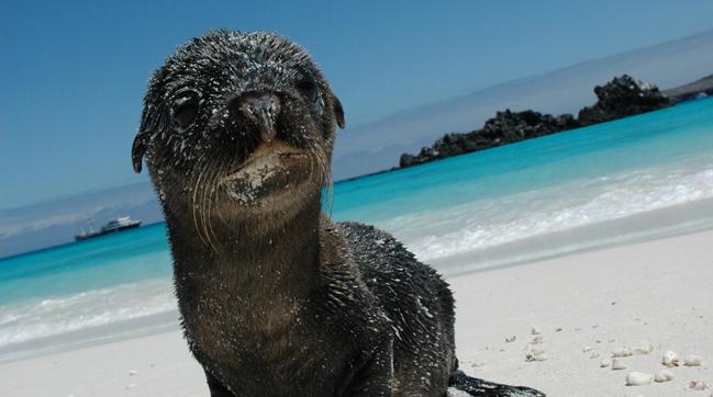 Galápagos e leos marinhos
