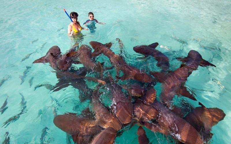 Bahamas exumas: mergulho com tubaroes