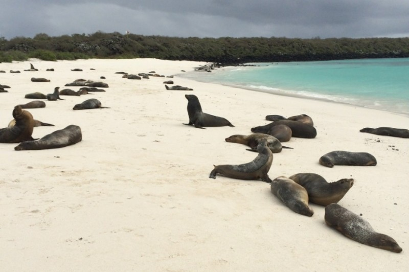 Sea-Lions-at-Gardner-Bay-Galápagos-Islands-Ecuador