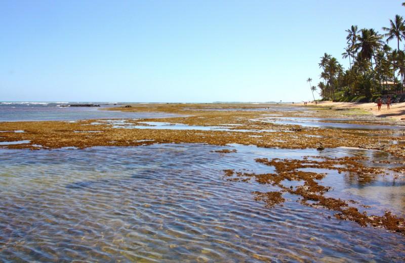 banco de corais na praia do forte
