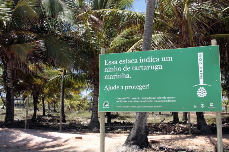 desova tartarugas praia do forte: projeto Tamar
