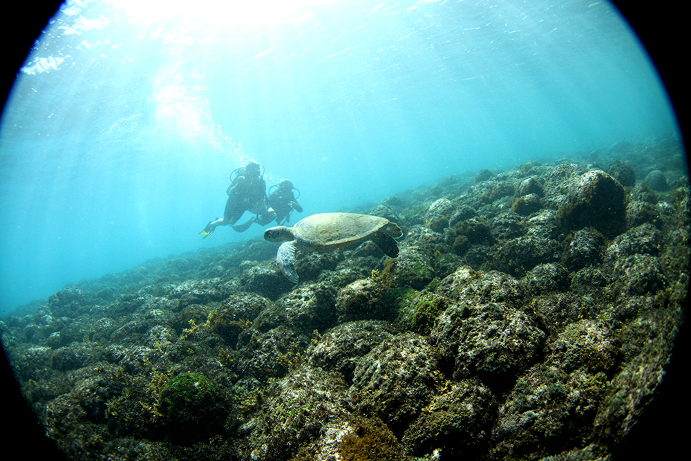 noronha divers mergulho tartaruga