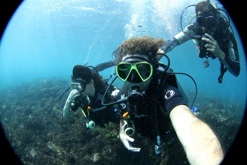 noronha divers mergulho tartaruga tubarao8