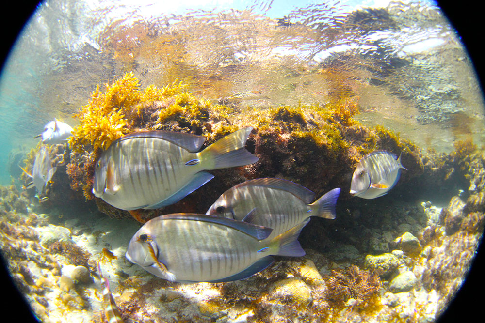 Praia do Atalaia: berçário de peixes
