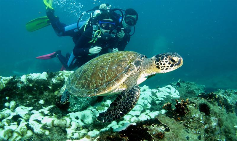 mergulho em paraty ilha dos meros
