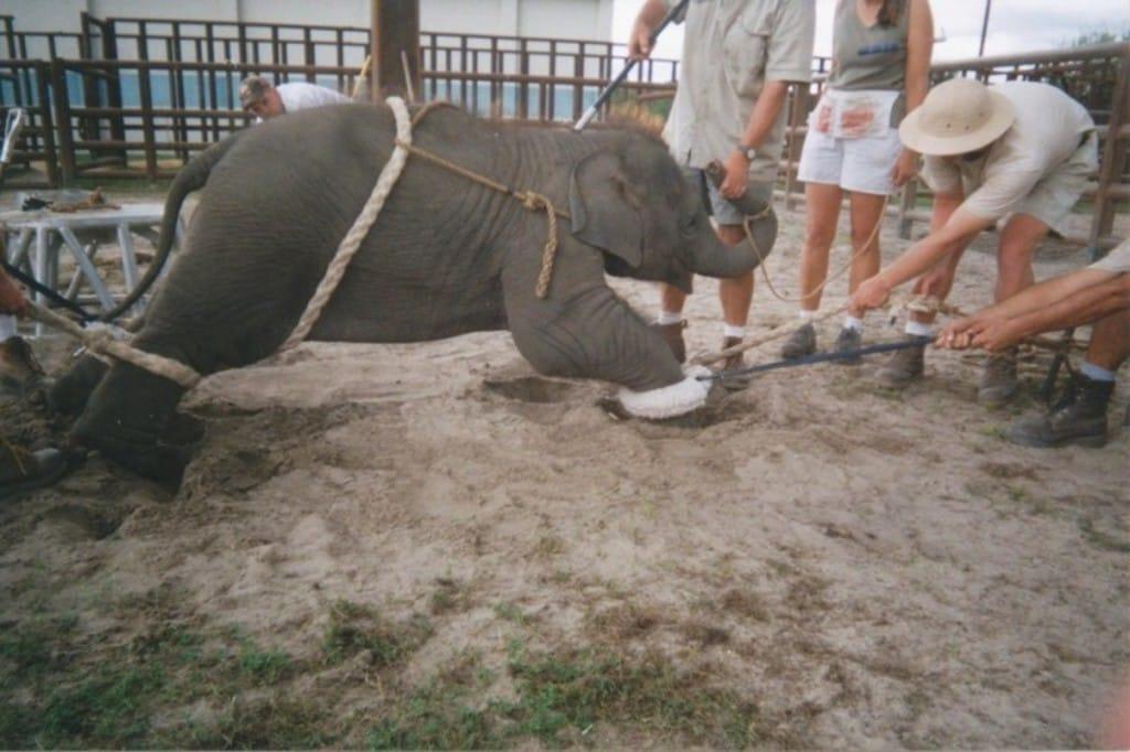 centro-de-conservacao-de-elefantes-na-florida