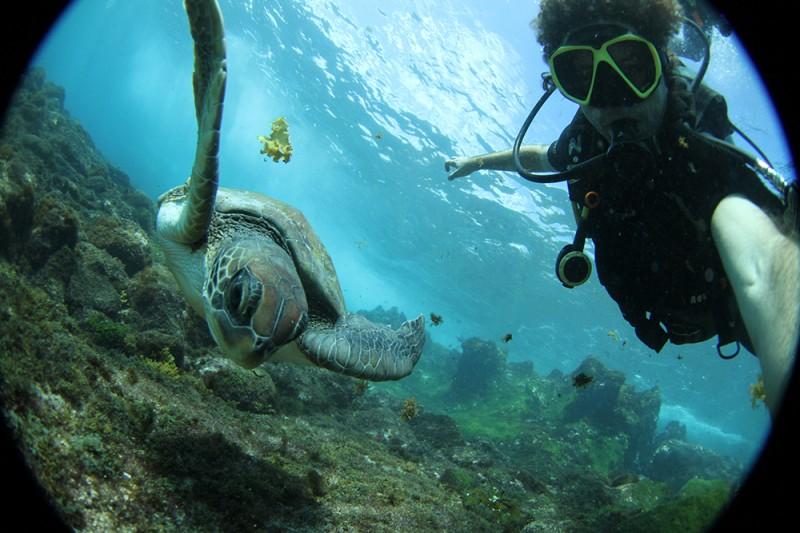 Graças ao Tamar, hoje há uma das maiores colônias de tartarugas do Brasil em Noronha