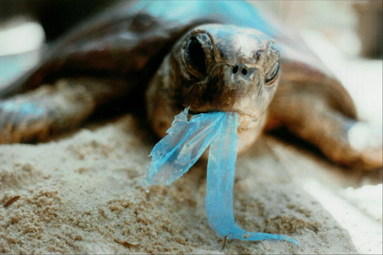 lixo nas praias turtles eating plastic
