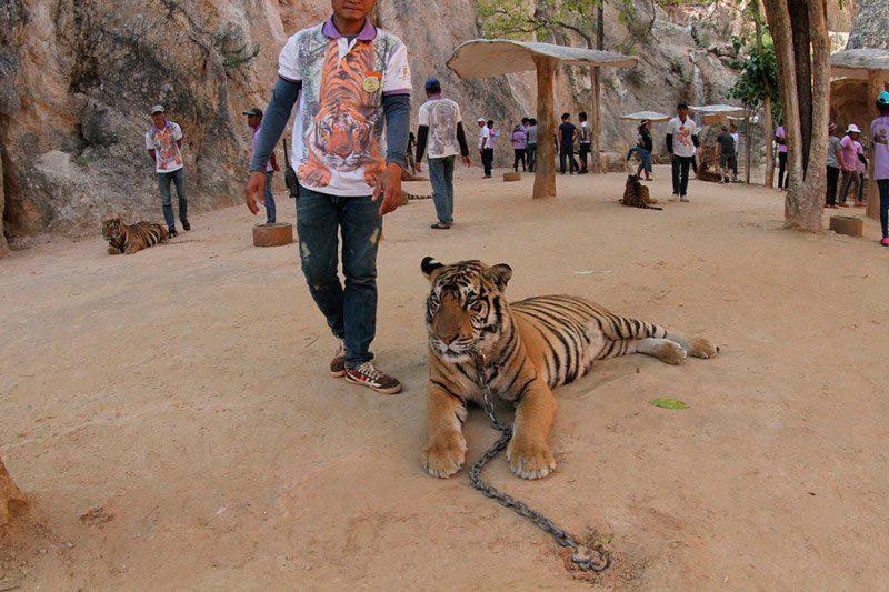 Viagem Tailândia e Sudeste Asiático bangkok tiger temple