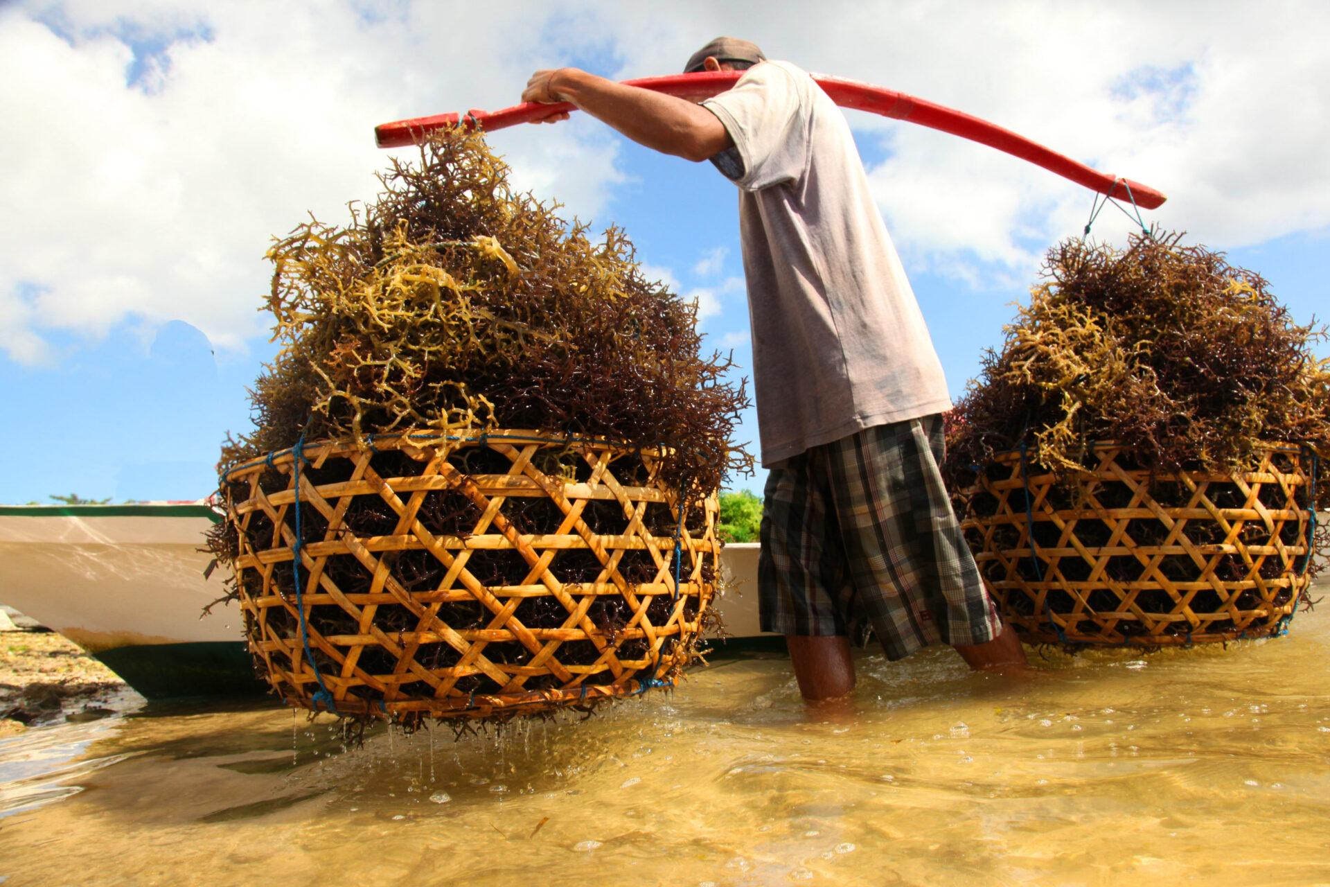 o-que-fazer-em-nusa-lembongan-algas