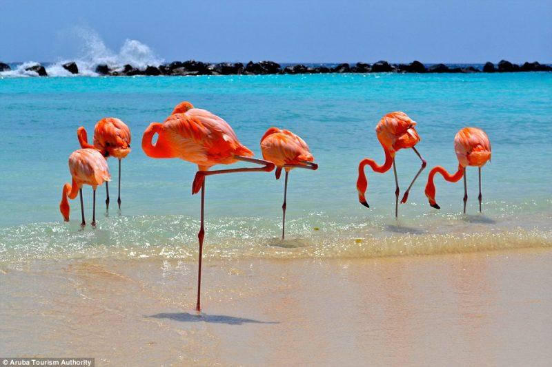 Praias em julho Aruba Caribe Flamingos