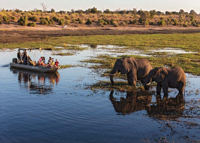 Onde ir em Agosto: passeio de barco pelo parque Chobe.