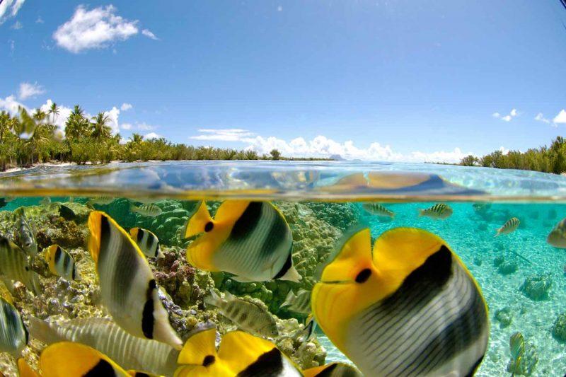 le-tahaa-island-resort_1489508407_3