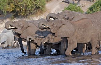 Chobe_National_Park_030