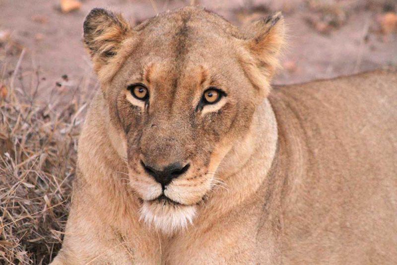Kruger Park dicas: avistando os big 5 no safari na africa do sul