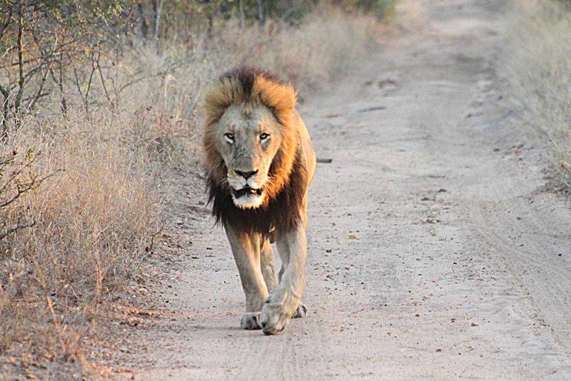 Melhores lodges de safari Africa do Sul: Thornybush