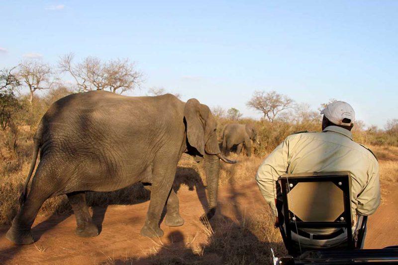 Como é o safari na Africa do Sul: reservas privadas ou Kruger