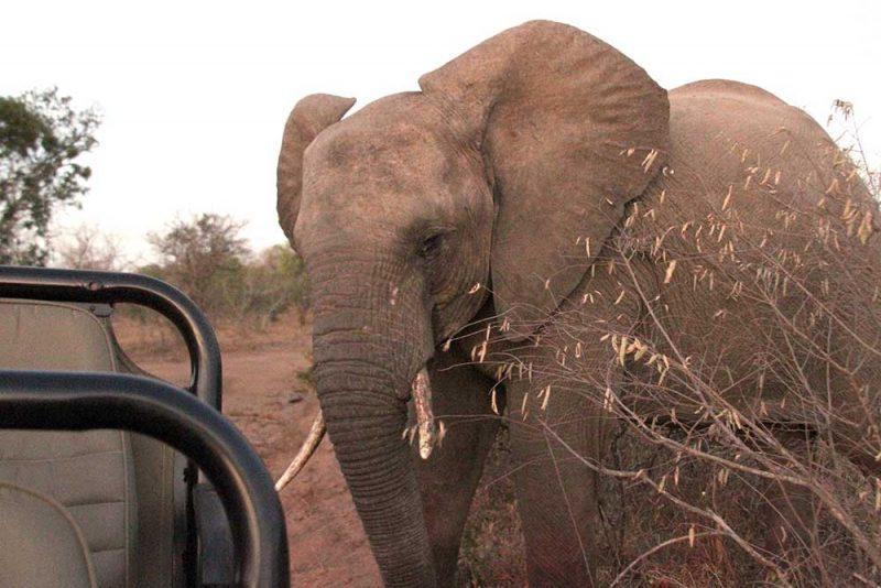 Melhores safári na África: elefantes pertinho