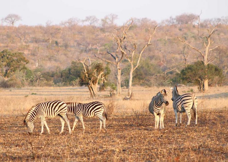 Safari na Africa do Suk: Sabi Sabi