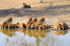 Safari África do Sul: tudo o que você precisa saber