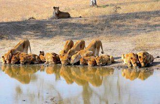 Big 5 africa do sul: onde ver