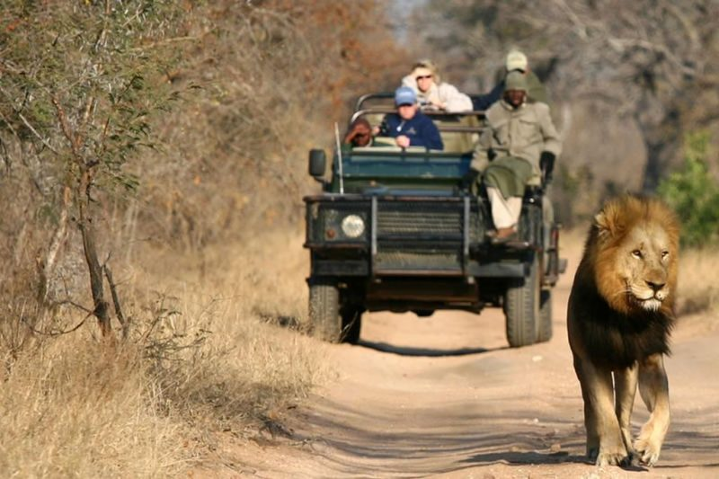 Thornybush Game Lodge - Africa do Sul