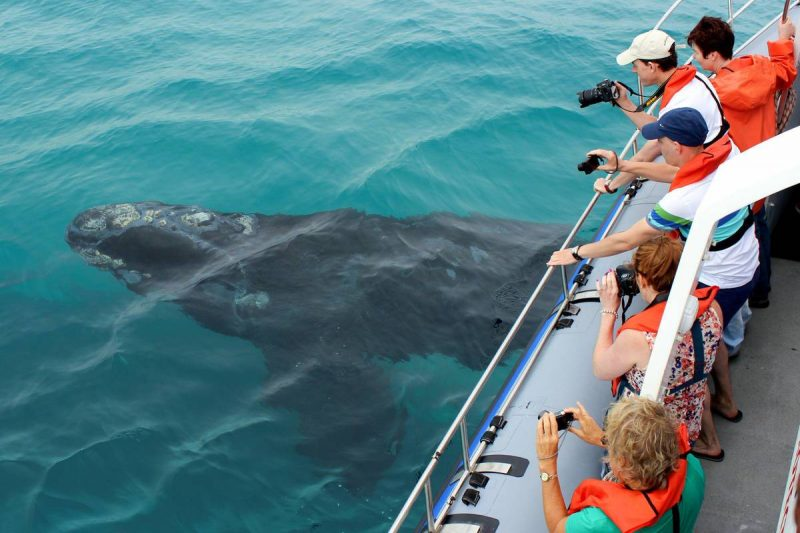 web-grootbos-experience-whale-watching-boat-03