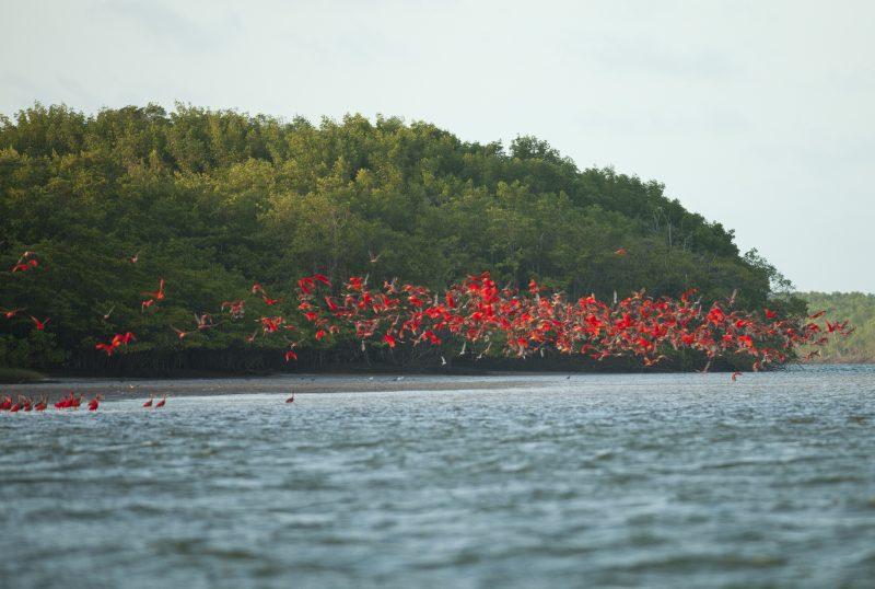 Ilha dos Poldros