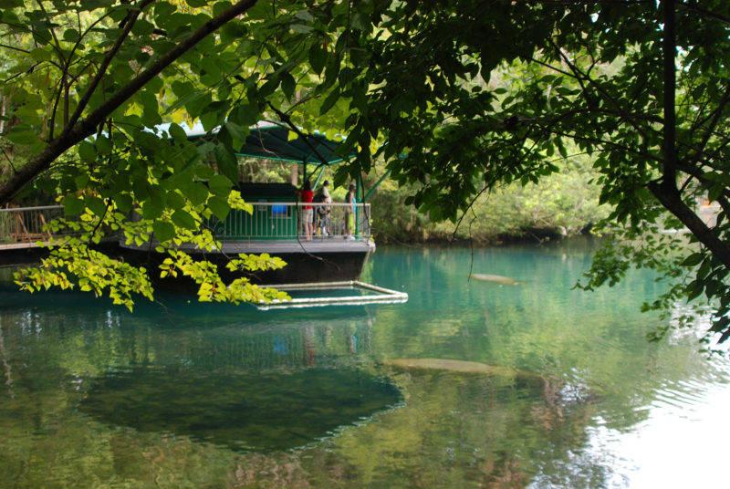 peixes-boi em Crystal River
