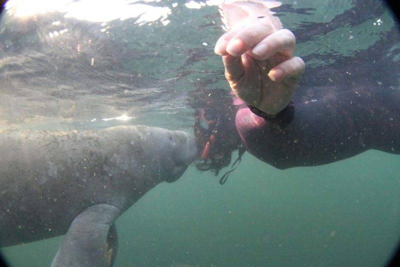 Roteiro Florida Crystal River: um deles veio me dar um beijo!