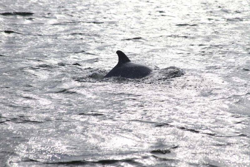 E pra coroar, golfinhos!