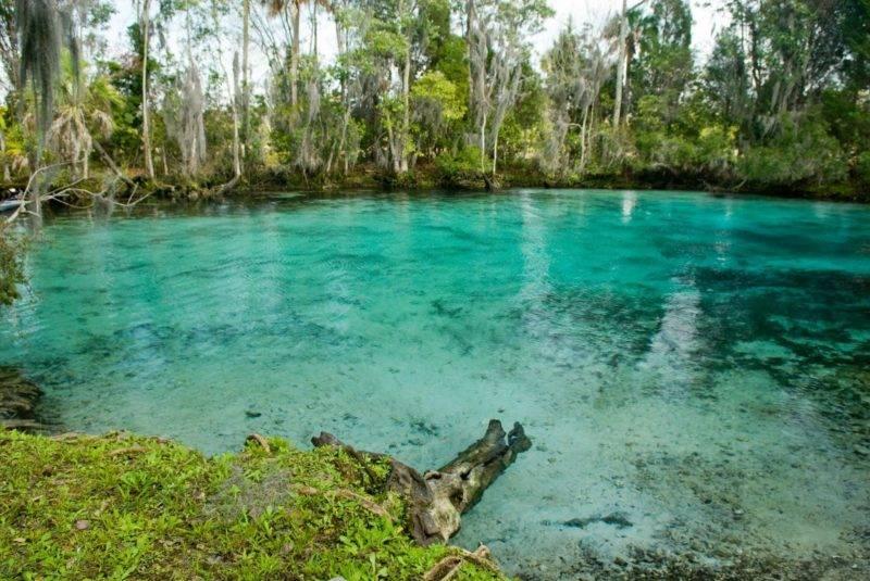 5 motivos para visitar Crystal River na Flórida