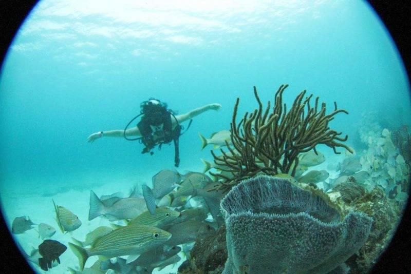 o que fazer em Cozumel: mergulho do Chankanaab