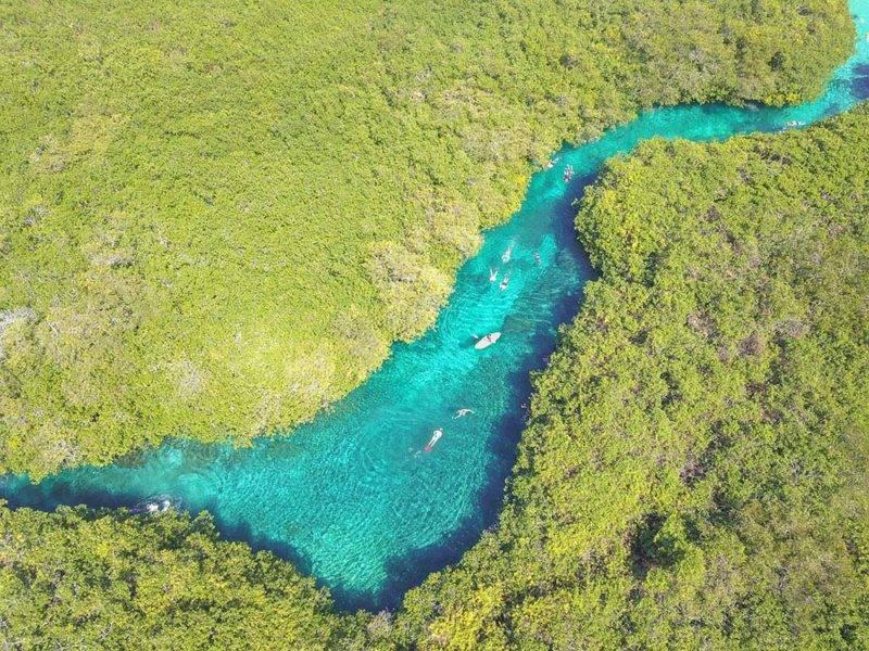 Cenotes México: o manati, do lado de Tulum