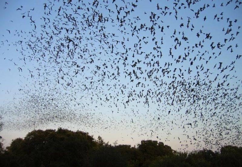 E a revoada de Morcegos!