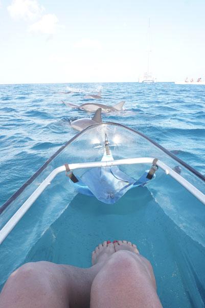 Muitos golfinhos em volta do nosso caiaque!