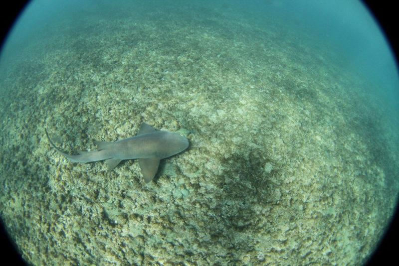Um dos tubarões que passaram pela gente na Praia do Sueste