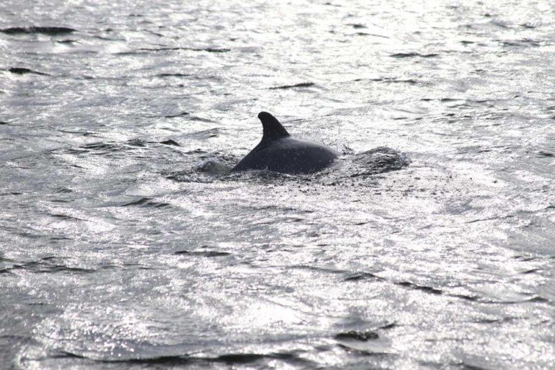 O que fazer na Flórida: vimos golfinhos no Golfo do México, em Crystal River.