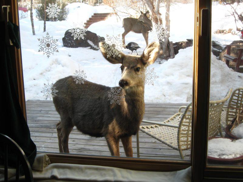 A foto Karen Dengler Kristen, mostrando a vista da sua janela em Basalto, no Colorado.