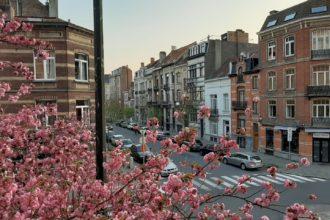 Cerejeiras e ruas vazias em Bruxelas, a partir da janela de Sophie Ho